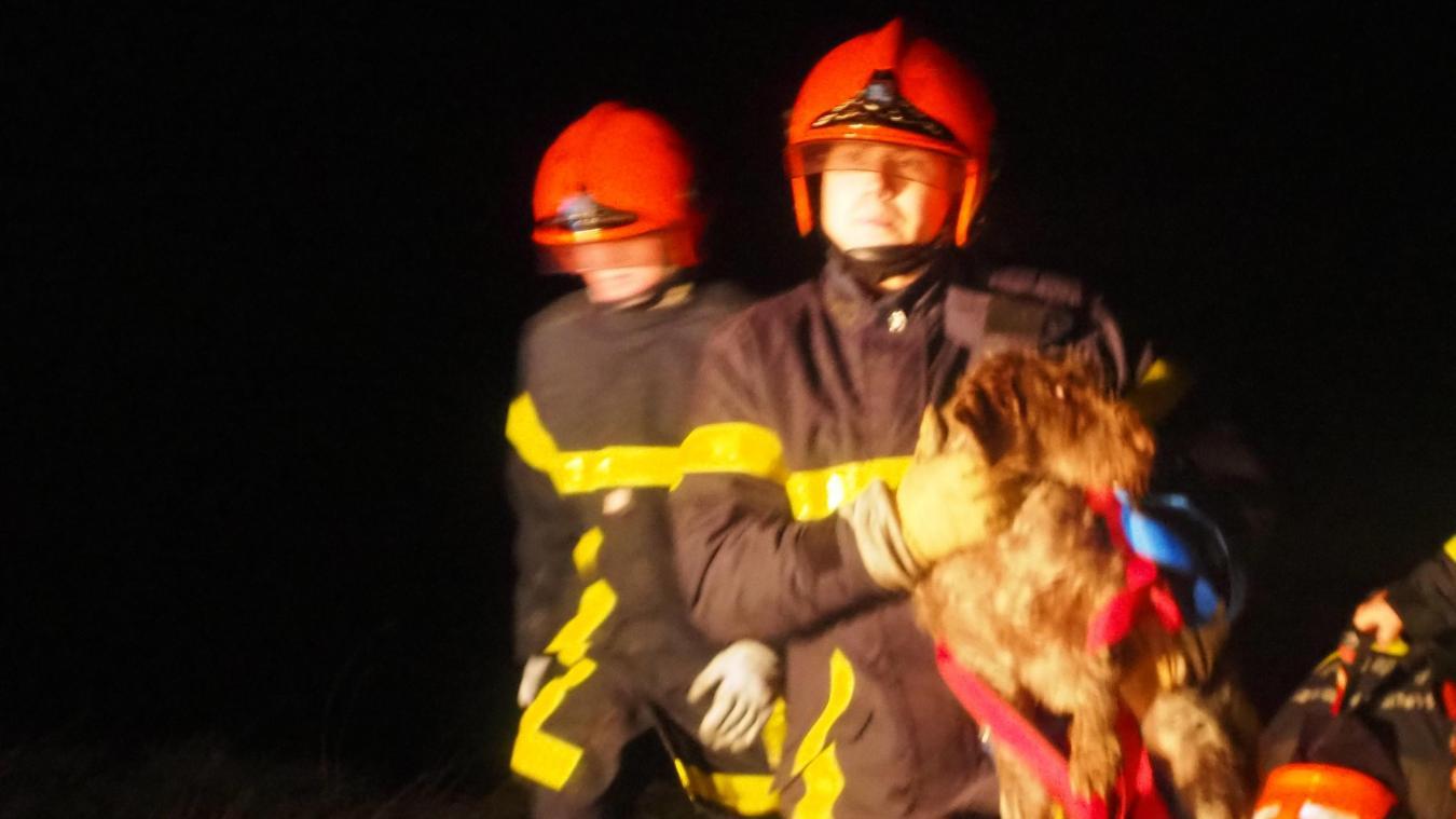Le chien a été ramené sur un terrain moins hostile à la tombée de la nuit.