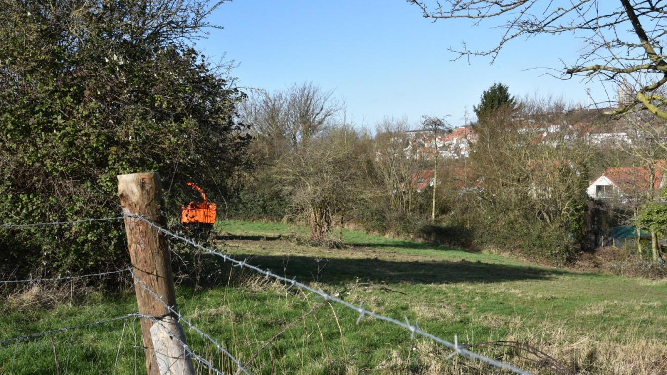 Les arbres proches des maisons (en contrebas sur la photo) ont été retirés par mesure de sécurité par le Département.