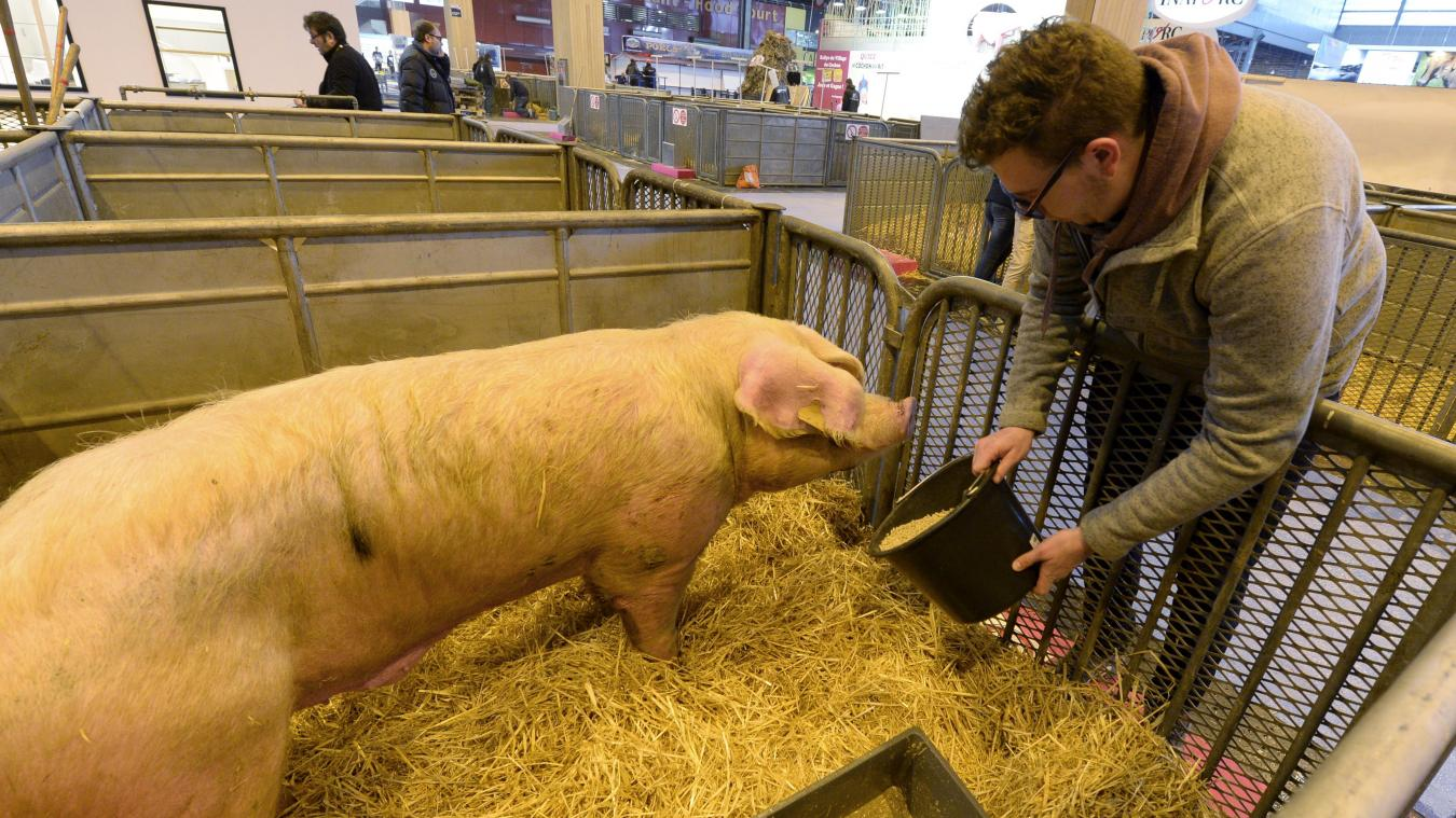 La Région des Hauts-de-France affiche son soutien au secteur agricole à quelques heures de l'ouverture du salon de l'agriculture.