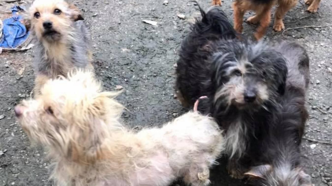 Au total, ce sont 30 chiens qui ont été retrouvés, ainsi que 3 chats et 1 lapin.