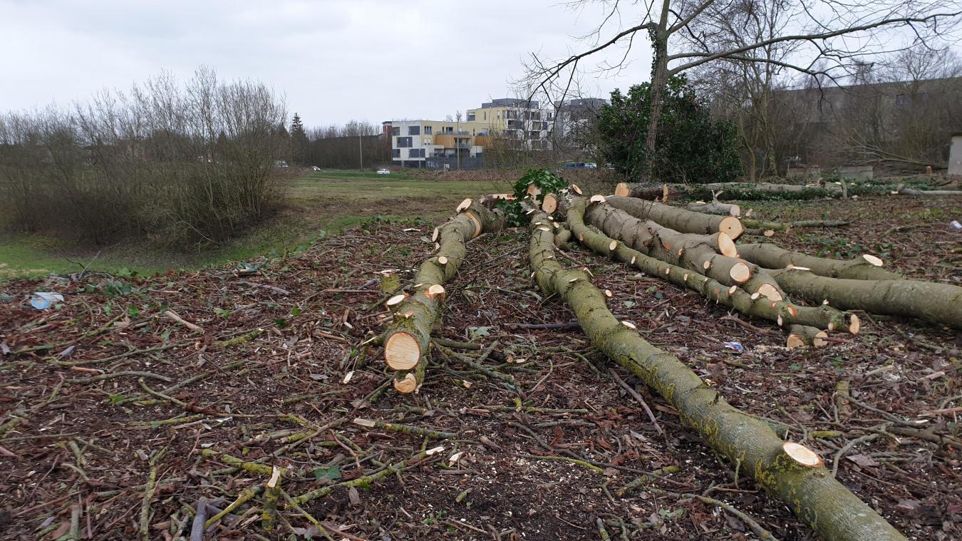 Si des arbres ont été abattus, « d'autres seront bientôt replantés », assure le président de la CUA, Pascal Lachambre.