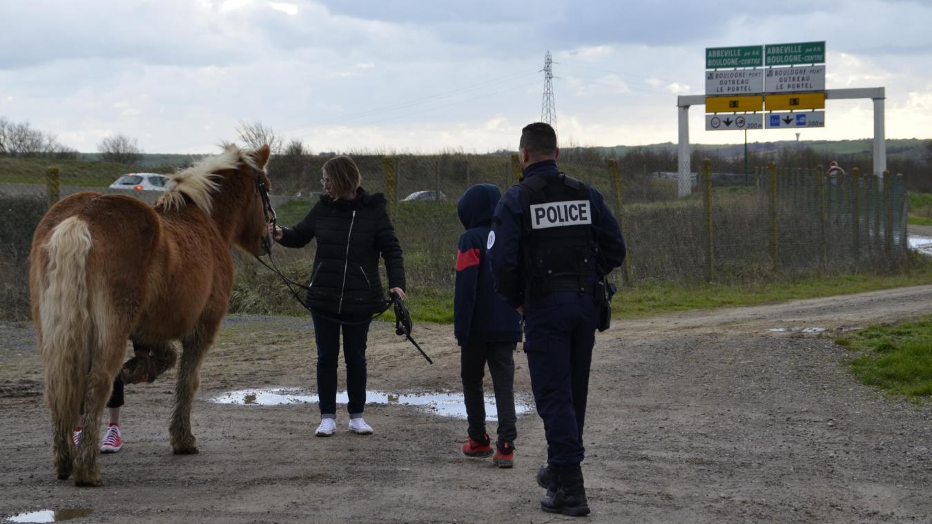 Une famille et les agents de police du commissariat de Boulogne-sur-Mer ont récupéré un poney en fuite, au galop sur l'A16.