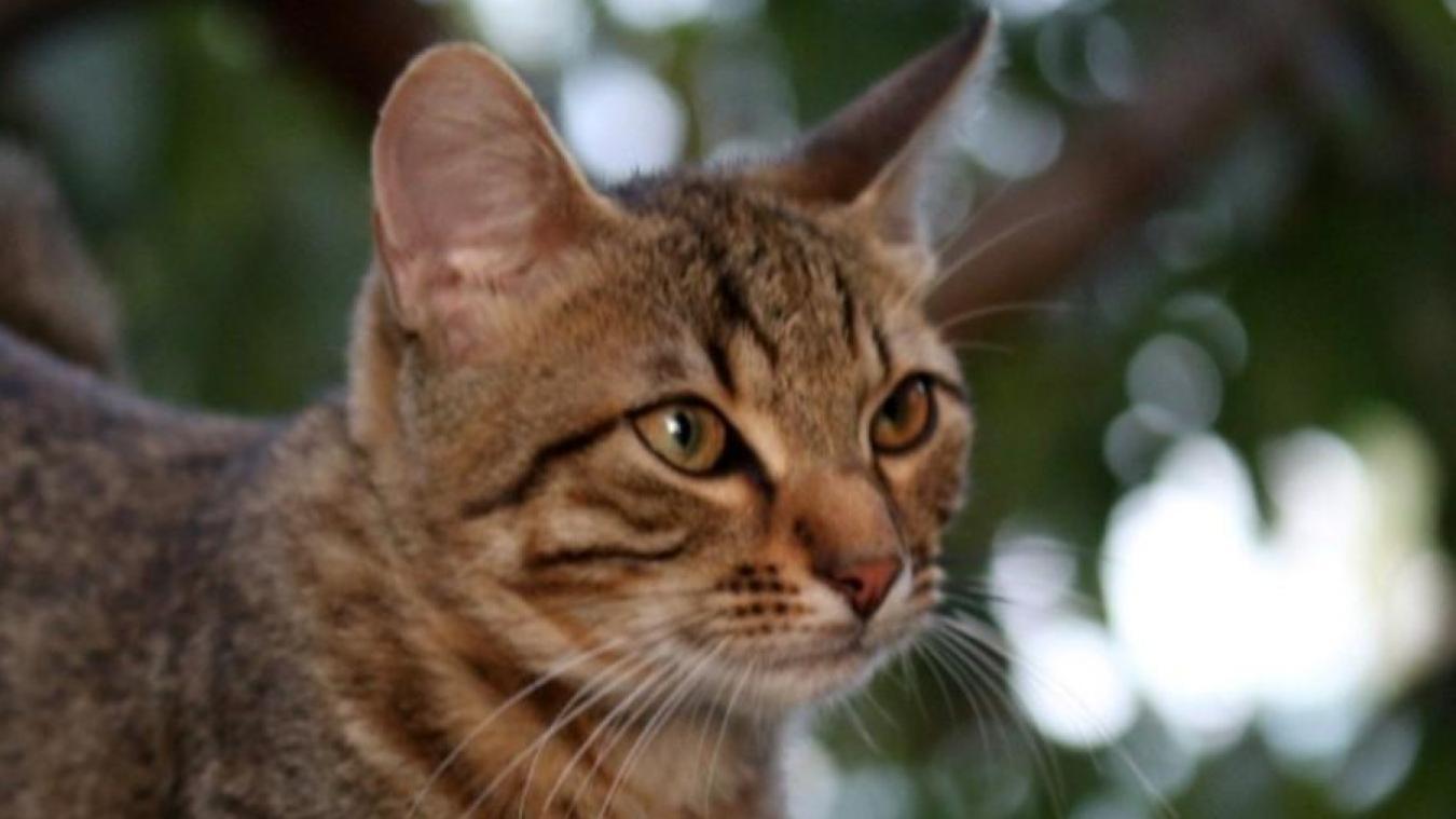 40 chats, jeunes et adultes, seront proposés à l'adoption.
