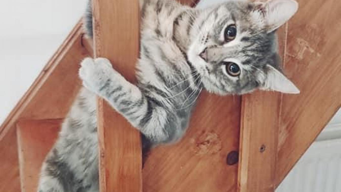 Avez-vous vu le chat de Louis perdu à Calais ?