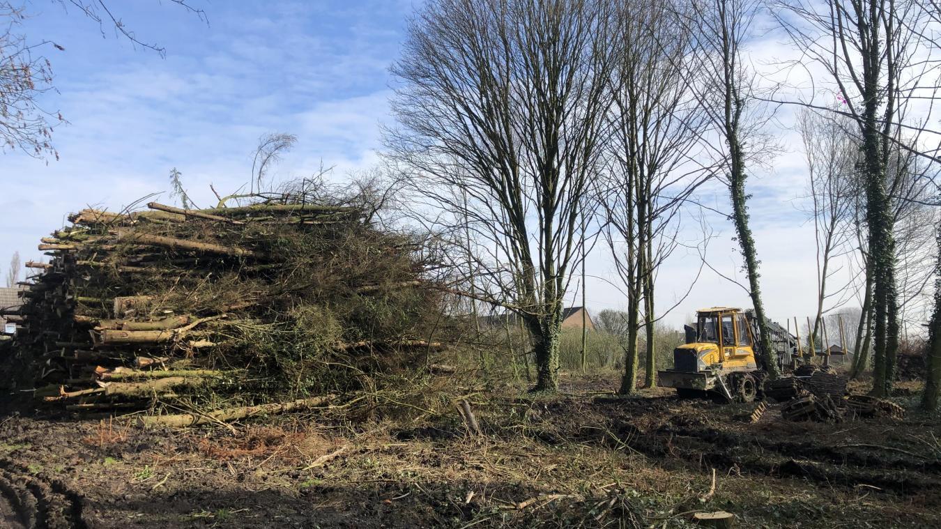 Depuis la semaine dernière, les épicéas du bois située derrière la maison Decanter sont coupés. Une décision radicale prise en raison d'une épidémie qui touche cette espèce.