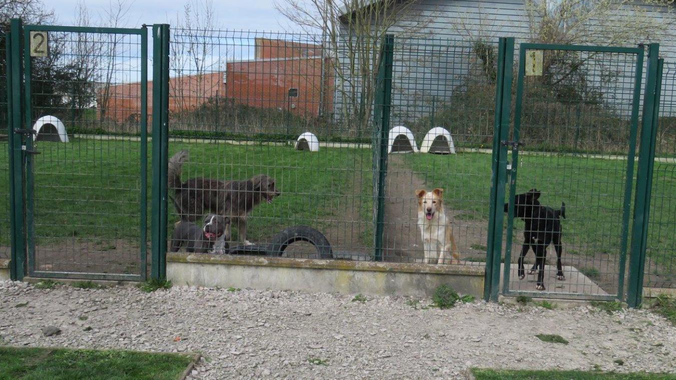 Des parcs fermés permettent aux chiens de se dégourdir les pattes.