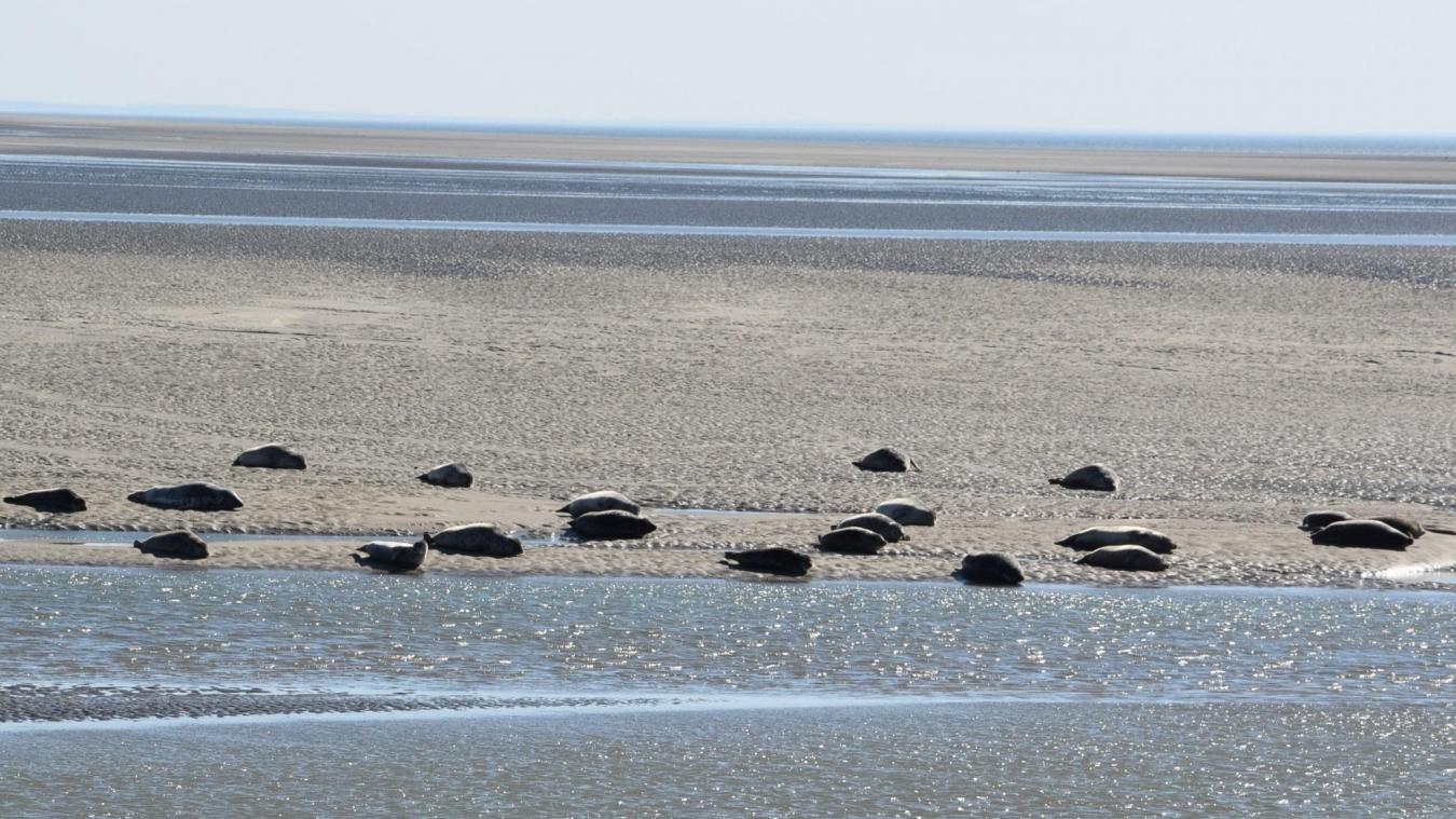Vidéo : les phoques berckois s'en donnent à coeur joie