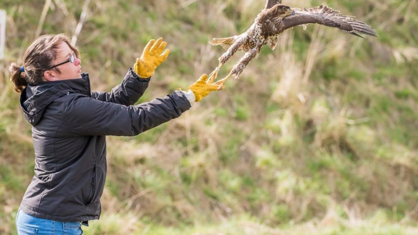 Pour le Bapalmois Didier Plouchard : « Les oiseaux vont reprendre certaines zones»