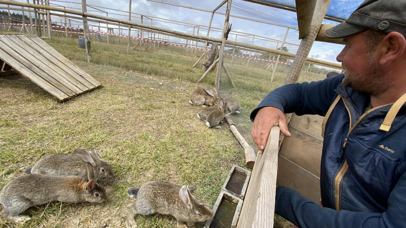 Les enfants peuvent nourrir librement les animaux lors de la visite.