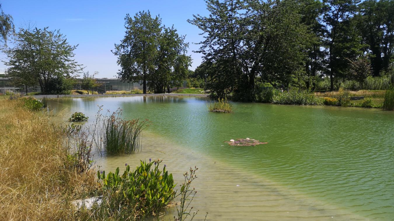 Le bassin est un agréable trait d'union entre le parc et le bois pionnier. On y croise toute une faune et des insectes devenus trop rares, comme la libellule.