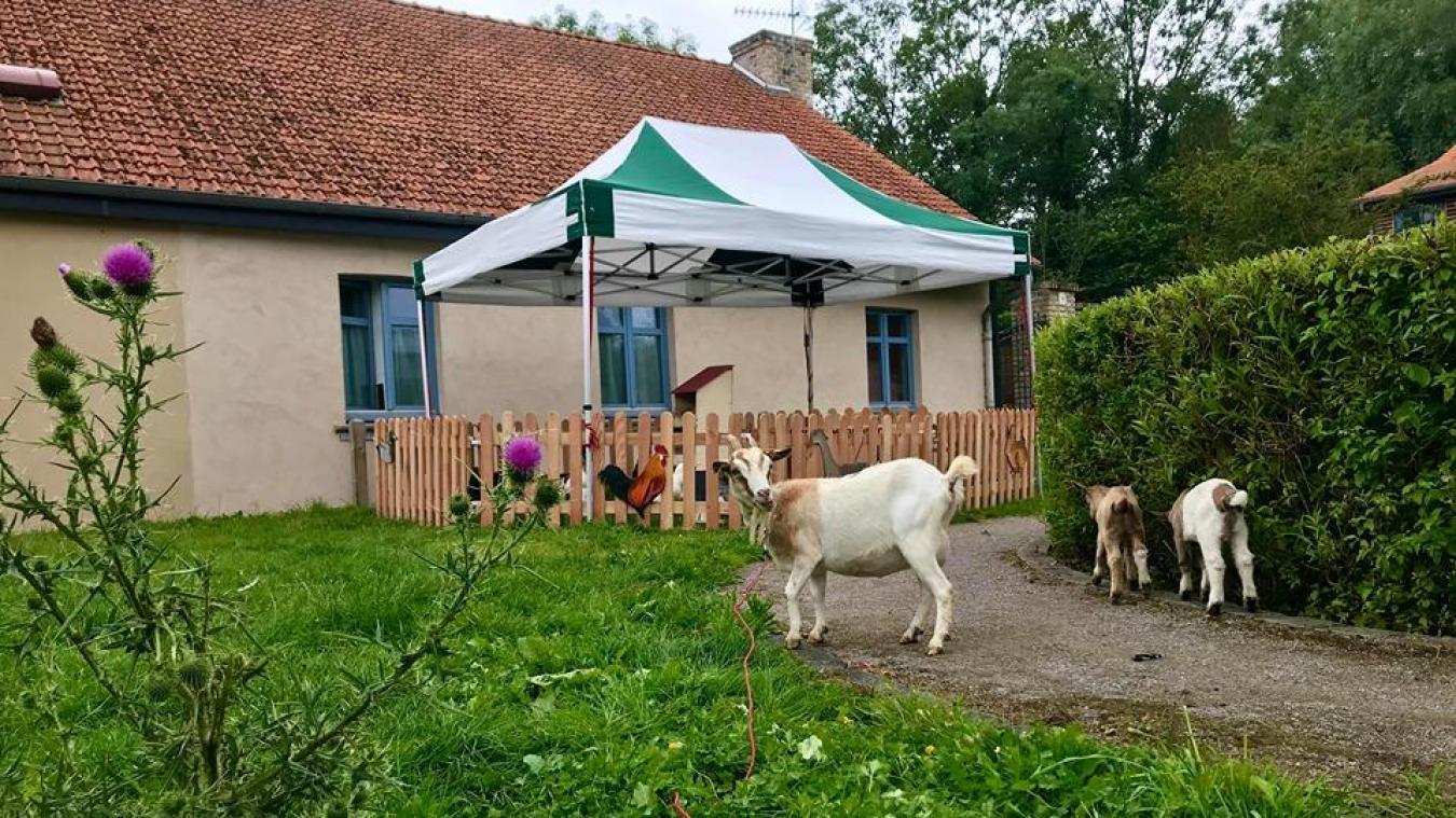 Le marché de dimanche va conclure cinq jours d'activités à la ferme des Aigrettes.
