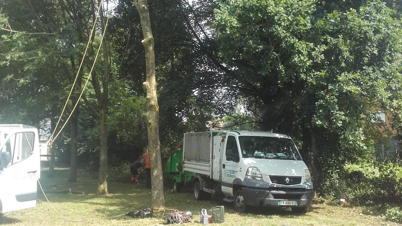 Des arbres ont été abattus pour la construction de trois maisons près de Riaumont.