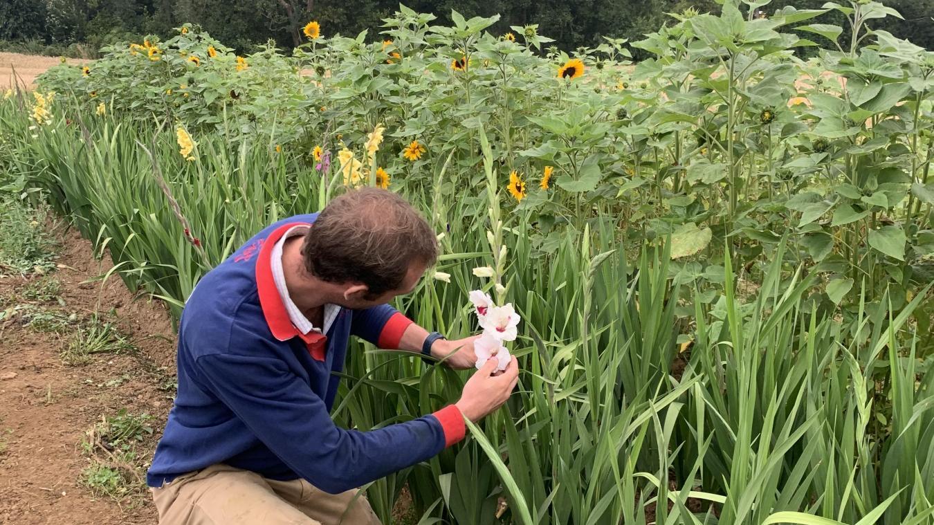 Cappelle-Brouck : des fleurs en libre-service contre sa confiance