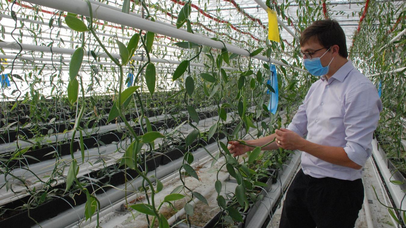 Antoine du Granrut est très attentif au développement des plants.