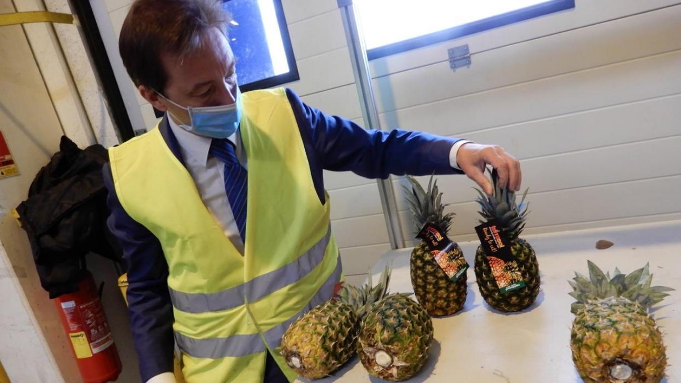 Les premiers ananas de la nouvelle liaison maritime entre la cité de Jean Bart et l'Amérique du Sud ont débarqué au port de Dunkerque le lundi 10 août. Ils arrivent prêts à être consommés.
