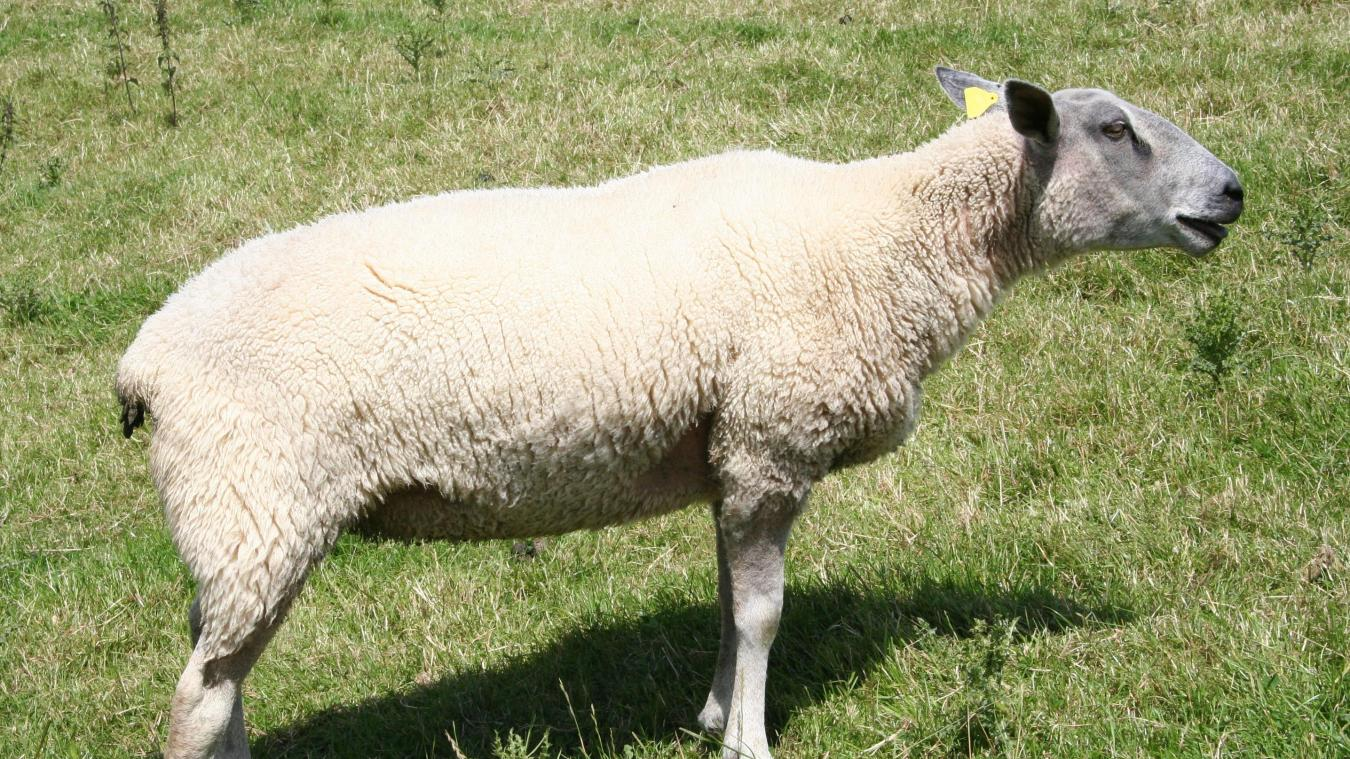 Au cœur du troupeau, l'éleveur de moutons Boulonnais évoquera l'intérêt du pâturage pour cette race locale, le savoir-faire des éleveurs, la culture du goût et la contribution des agriculteurs à la beauté des paysages, notamment au travers du dispositif européen Natura 2000.