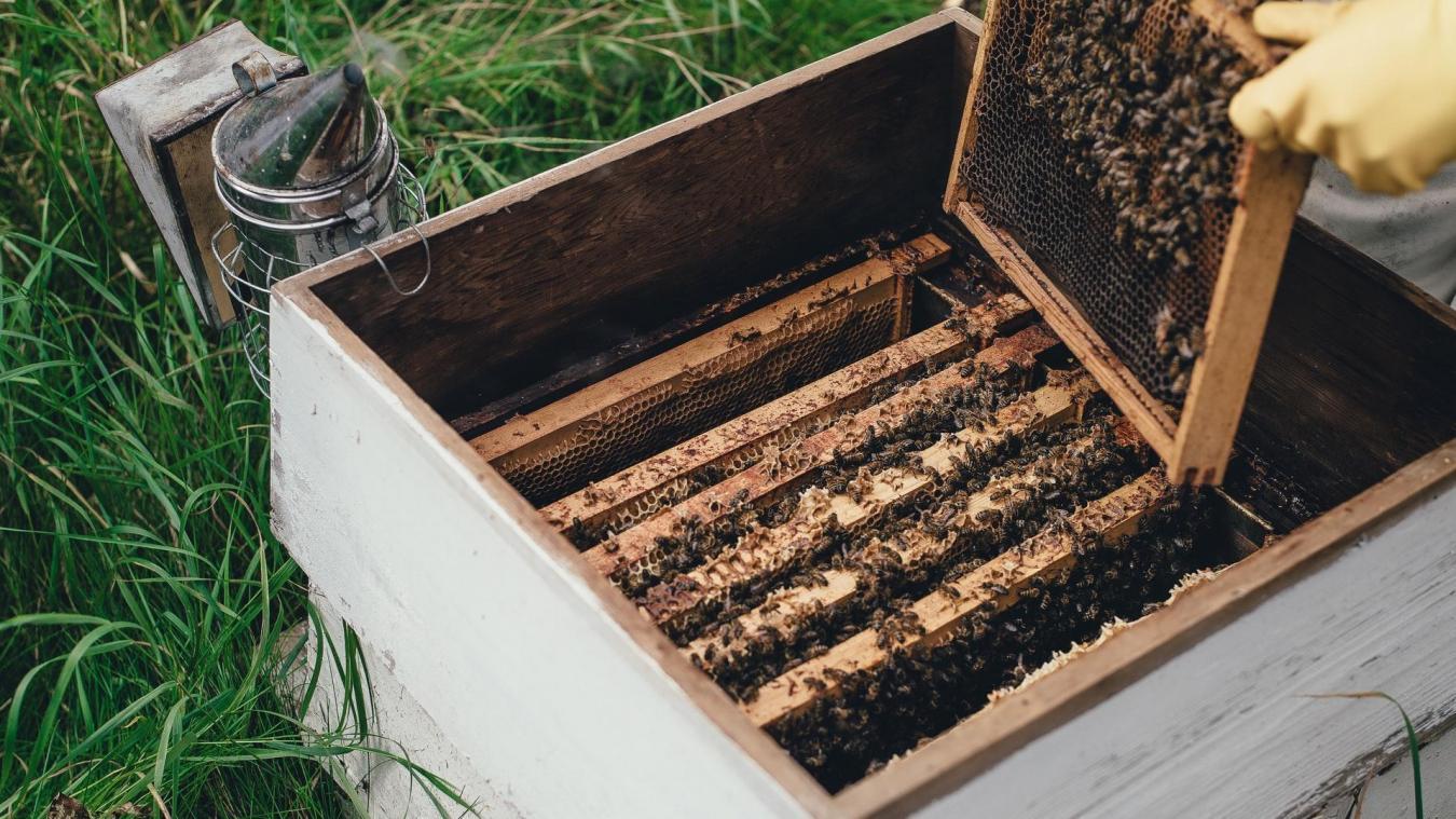 Laurent Duporge est favorable à l'installation de ruches à Liévin. Photo : Archives.