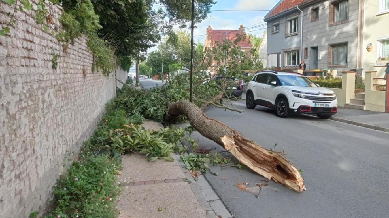 Guînes: un arbre tombe sur la chaussée et coupe la route