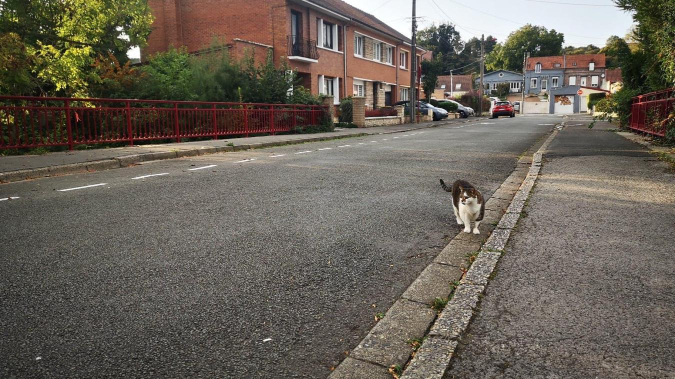 Calonne-Ricouart: gardez vos chats chez vous!