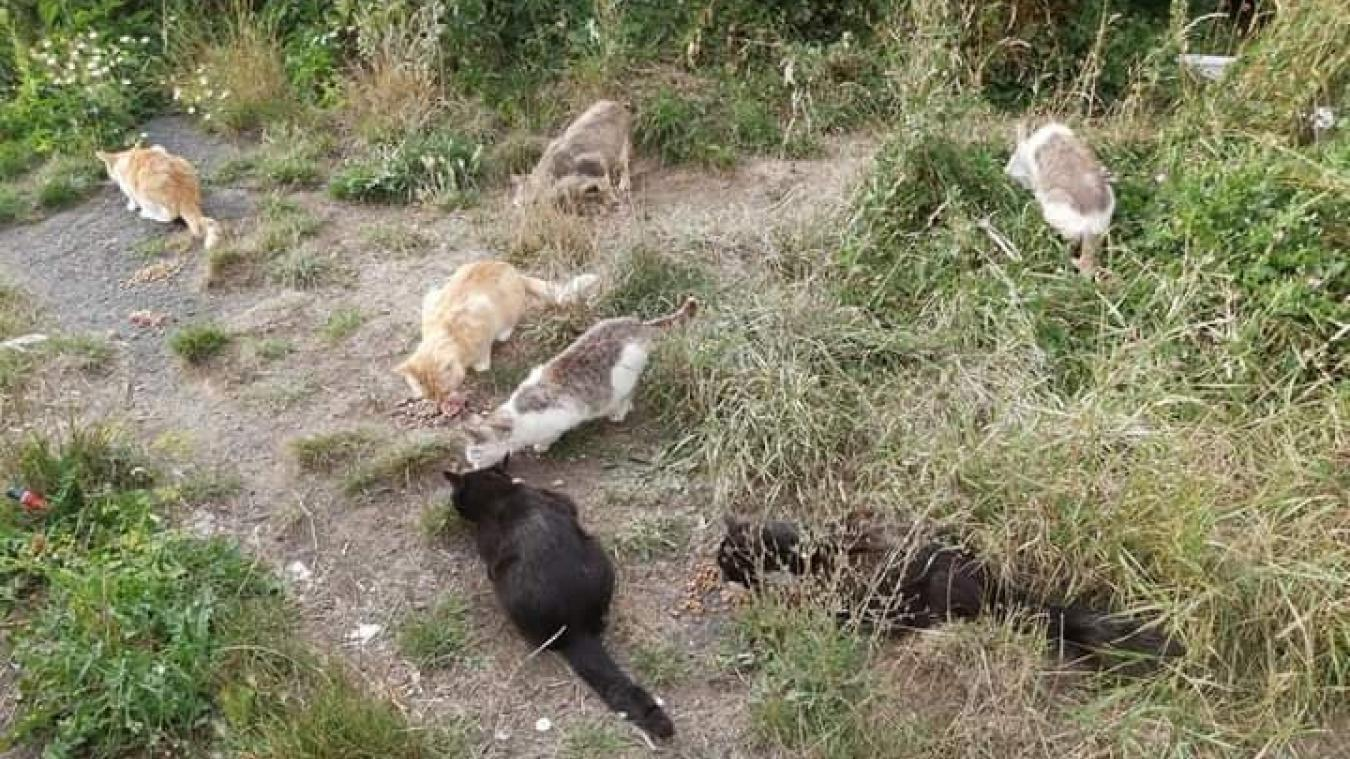 Bruay-la-Buissière: elle cherche un local pour les chats errants
