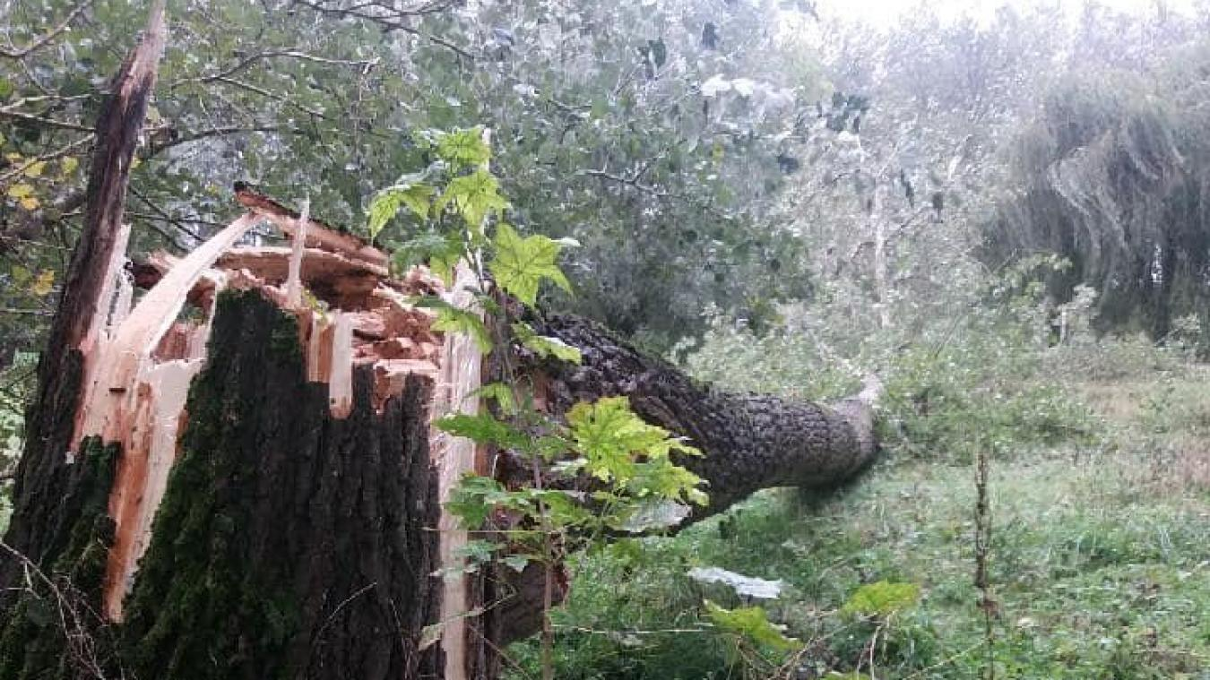 La force du vent a été si violente que certains arbres ont cassé.