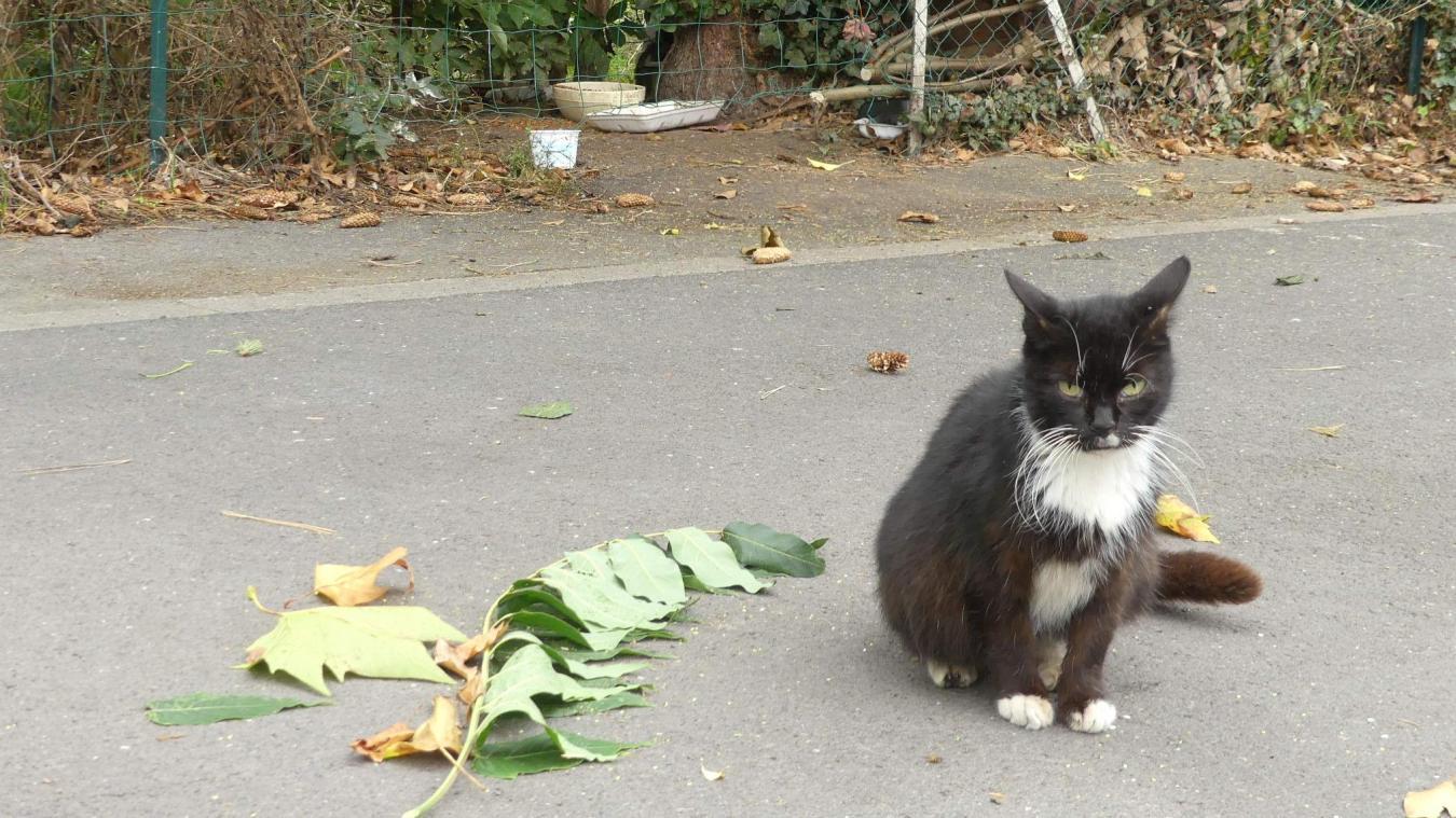 Hazebrouck veut limiter les nuisances liées aux chats errants.