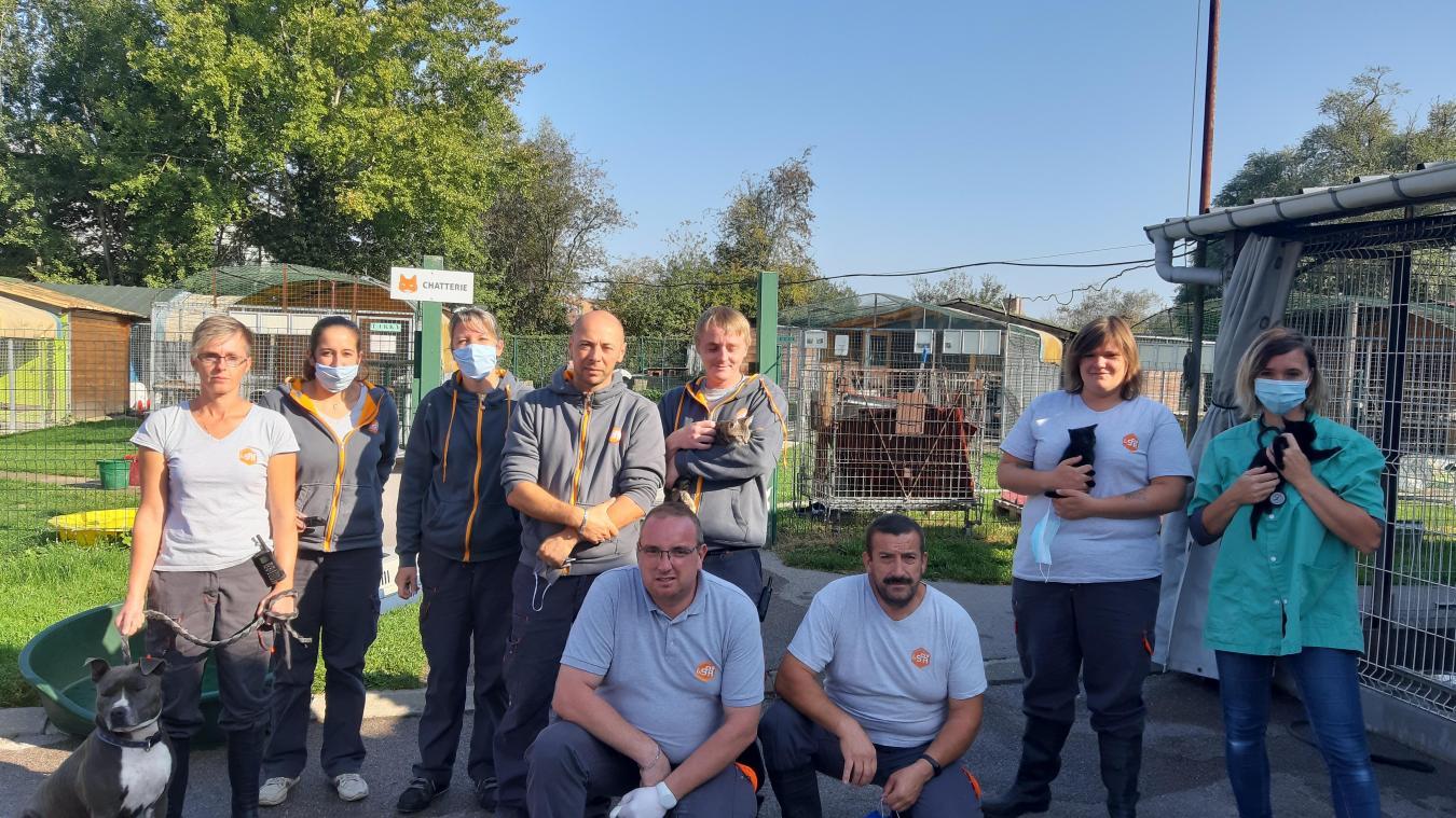 Saint-Omer : Hausse des abandons d'animaux