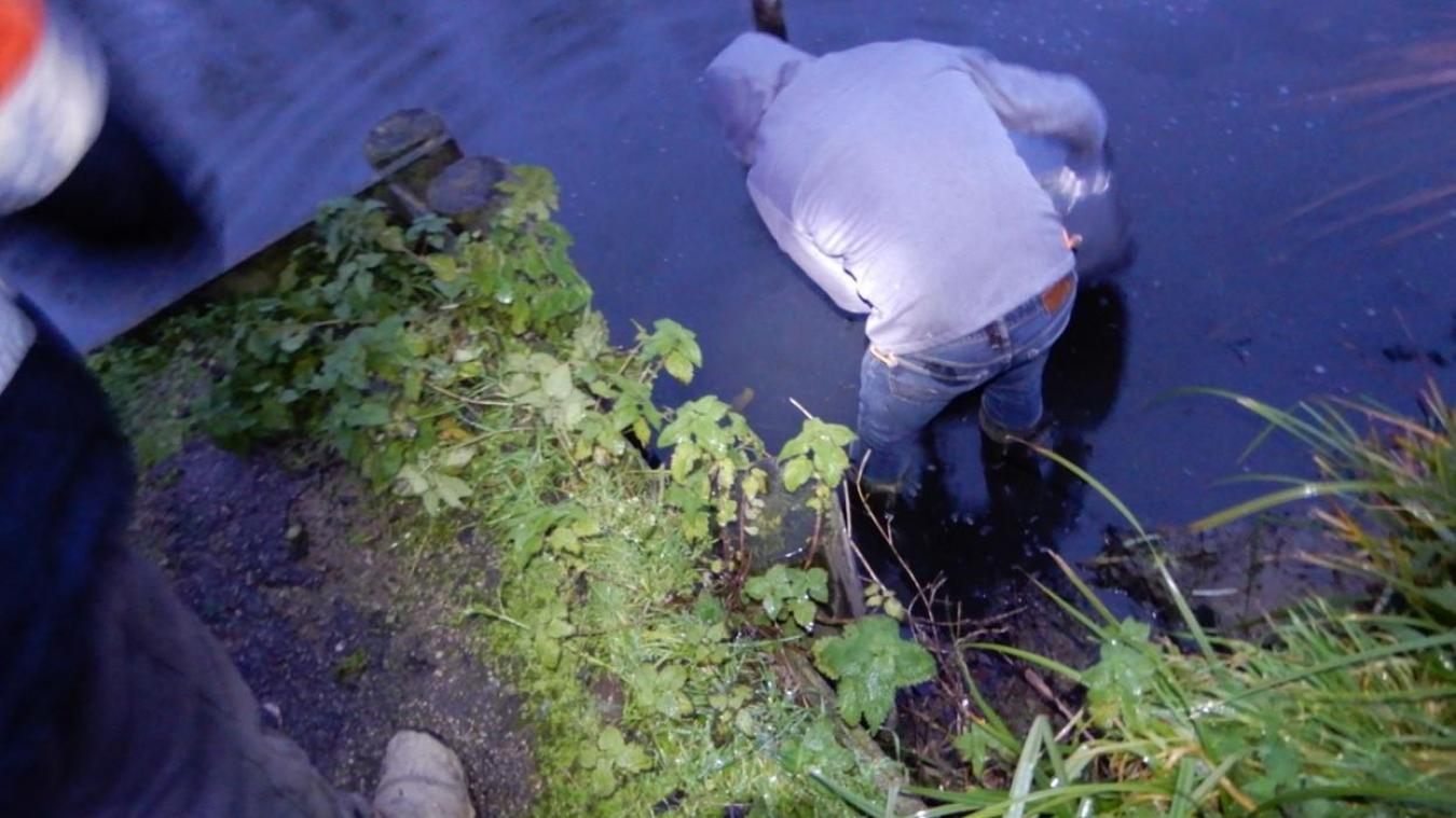 Des centaines de kilos de carpes, tanches, et gardons ont rejoint les parcours de pêche.