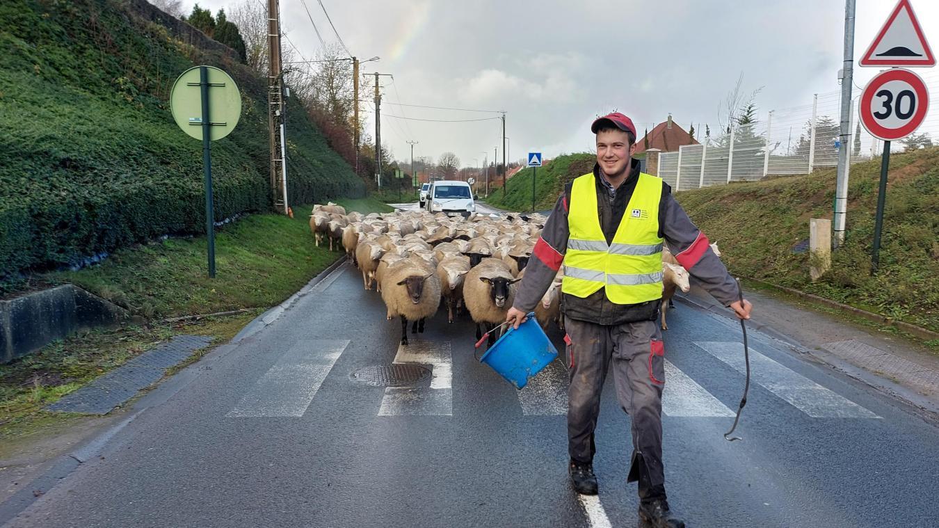 Deux lots de 200 moutons ont traversé Louches jeudi.