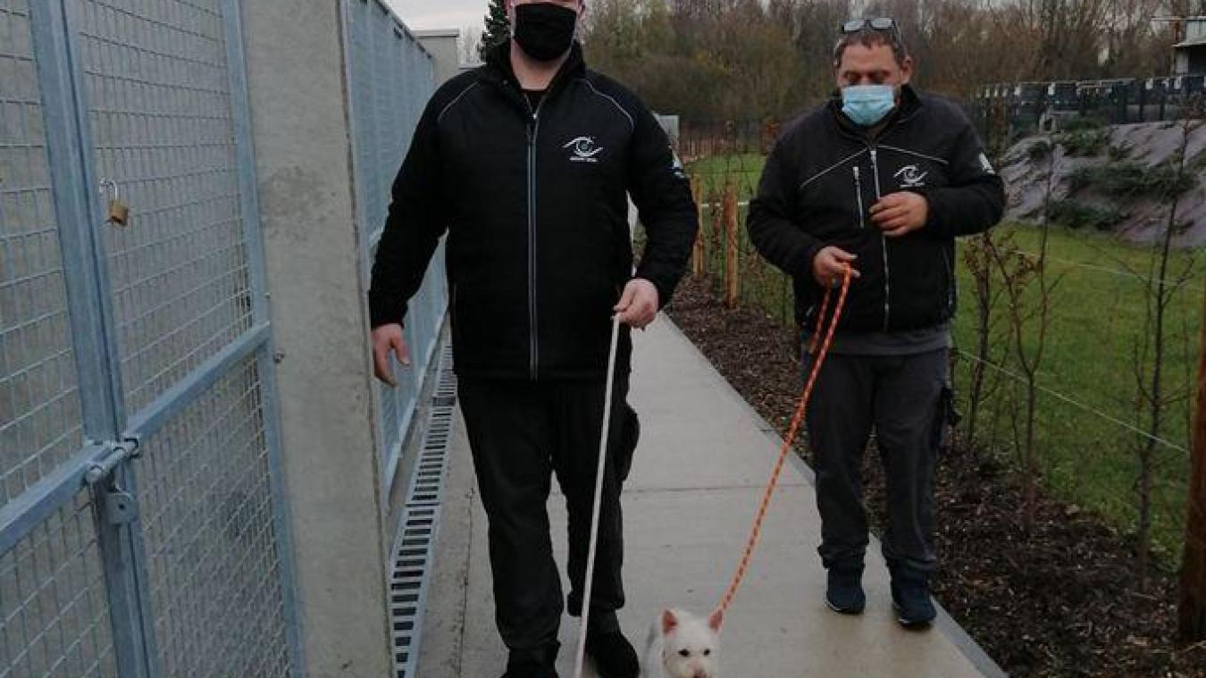 Lors des promenades, les techniciens testent les comportements des chiens avec leurs congénères puis avec les chats.