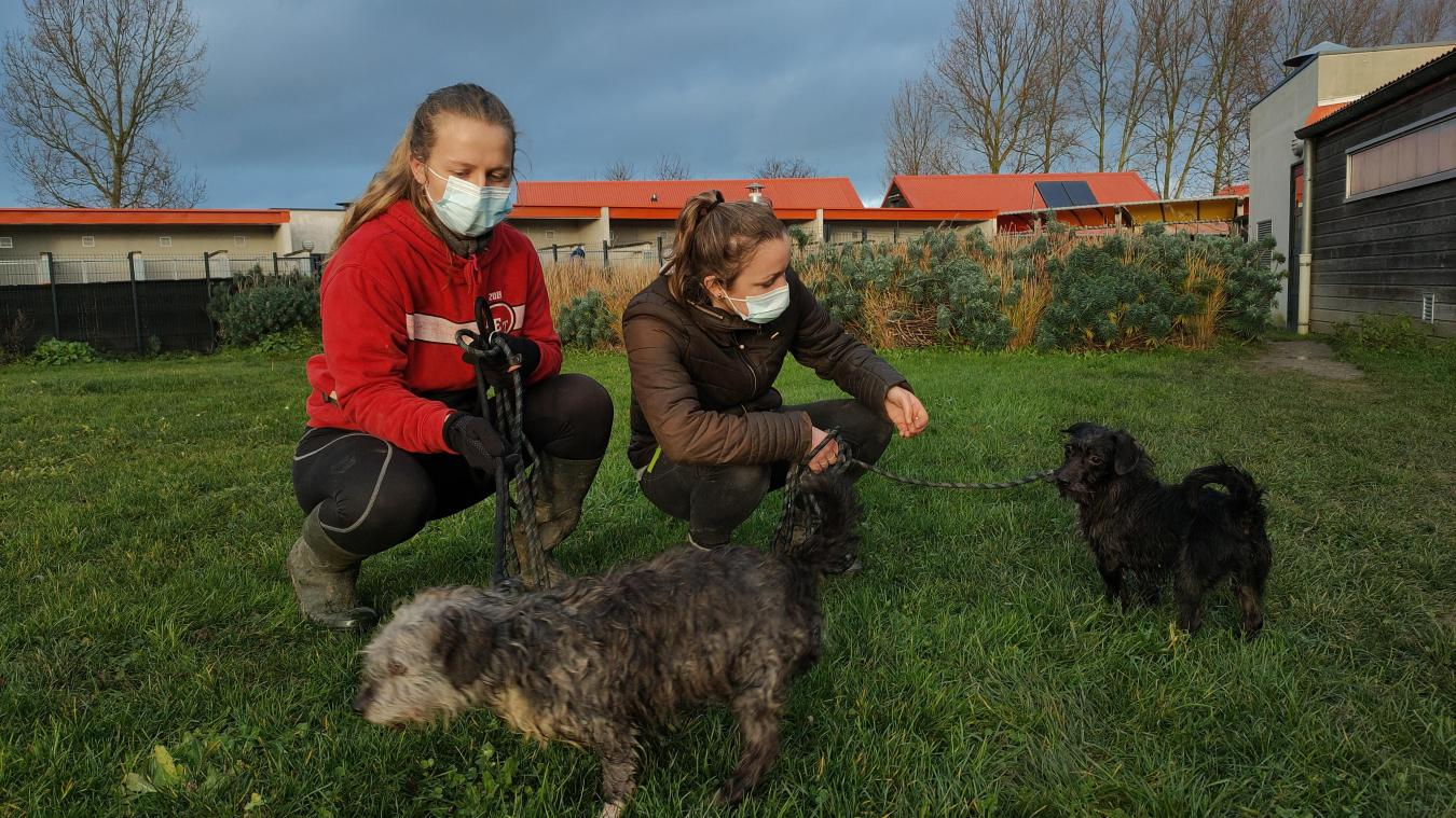 Élise et Margot font partie des bénévoles qui travaillent la relation de confiance avec les animaux de la saisie.