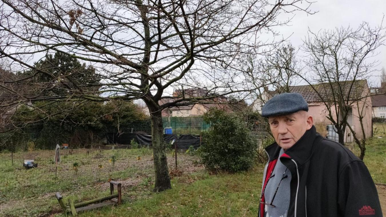 Le chêne a été planté le 11 novembre 1995, pour le premier anniversaire du petit-fils de Pierre. Aujourd'hui, le Saint-Polois veut trouver une solution pour le préserver.
