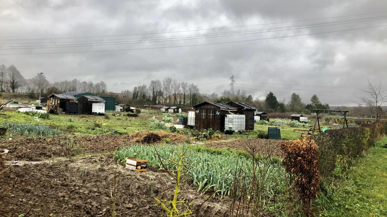 Les jardins ouvriers n'ont pas connu la crise du coronavirus cette année.