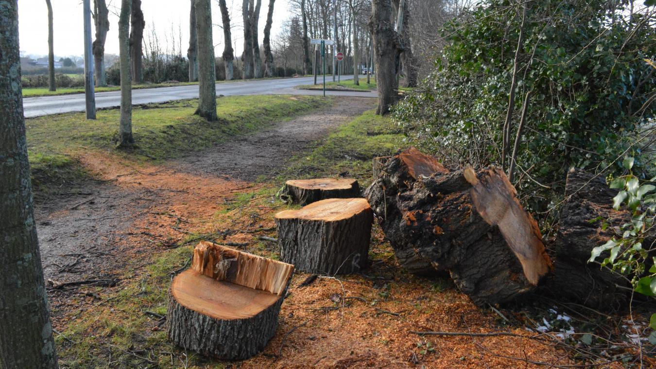 Plusieurs arbres ont été abattus au cours de la semaine, les travaux vont se poursuivre jusqu'à vendredi prochain.