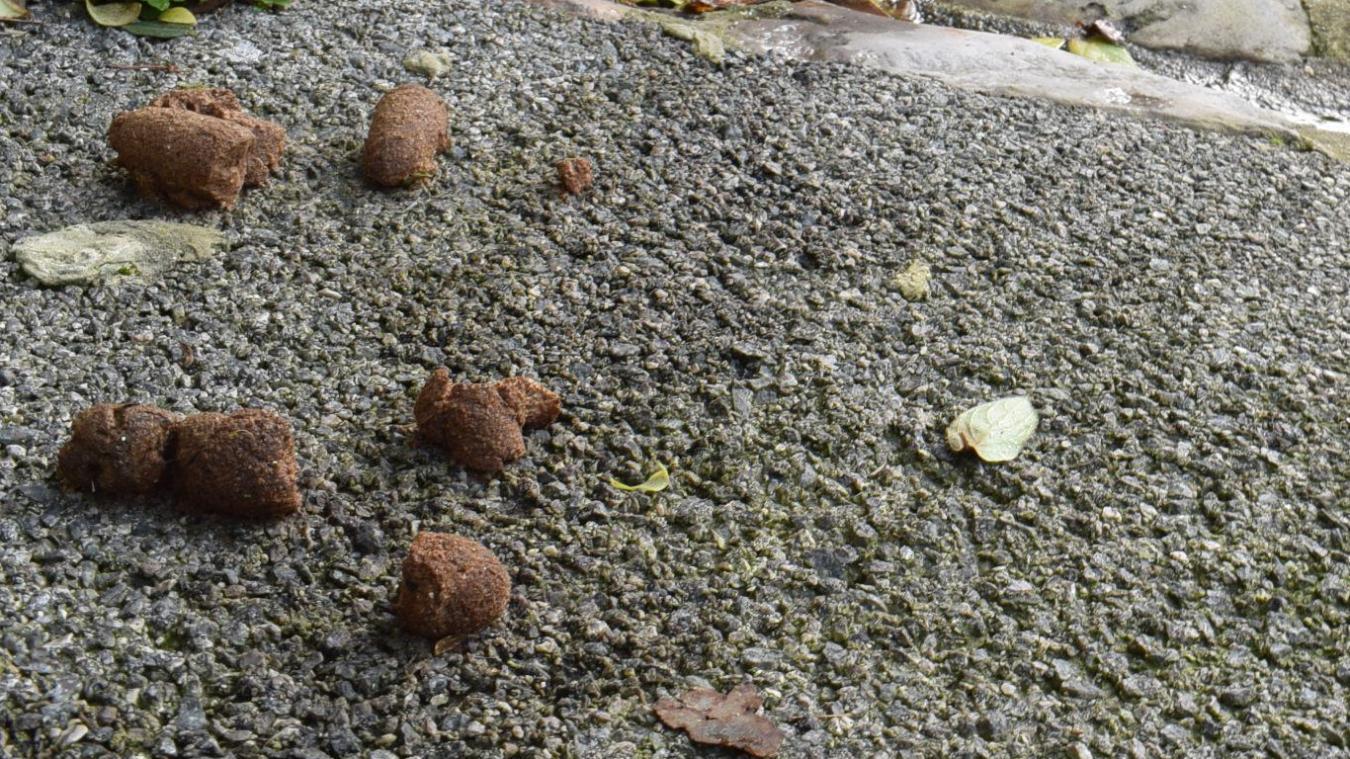 West-Cappel : nouvelle piqûre de rappel pour le ramassage de crottes de chiens
