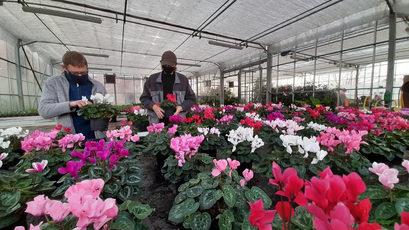 Les 18 employés municipaux et contractuels des espaces verts s'occupent soigneusement des fleurs qui décoreront la ville le printemps venu.