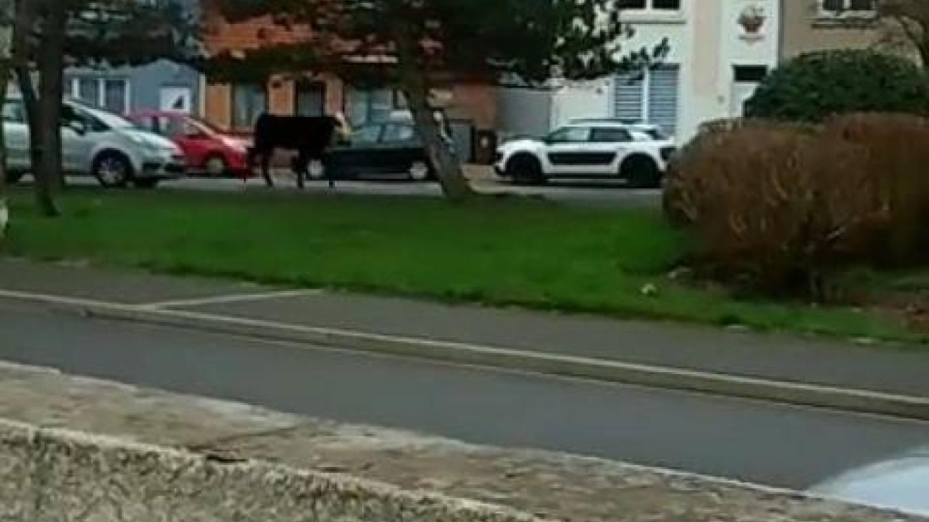 La scéne s'est déroulée chemin des Régniers à Coulogne.