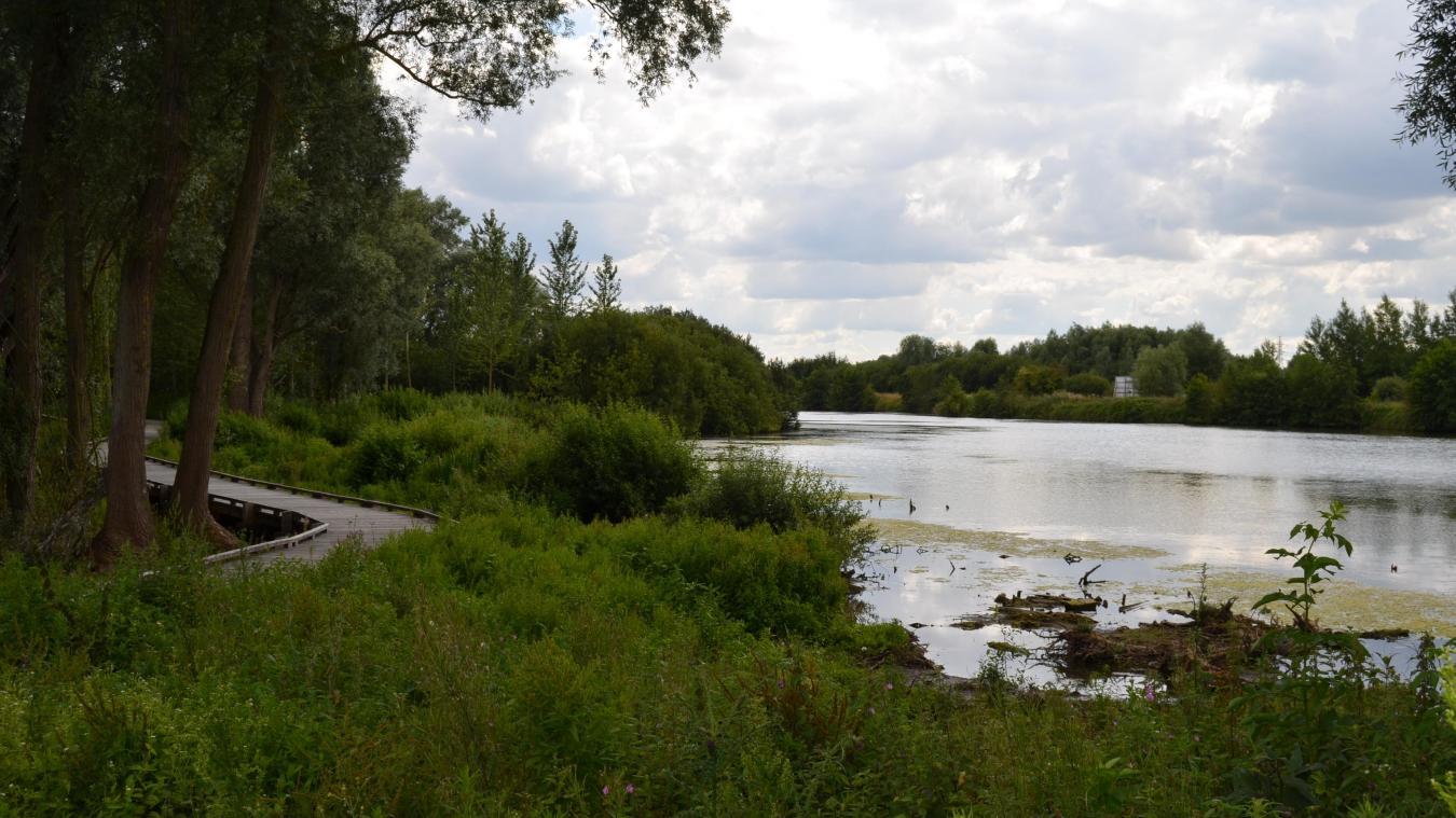 Aire-sur-la-Lys : Surprenez les oiseaux des Ballastières