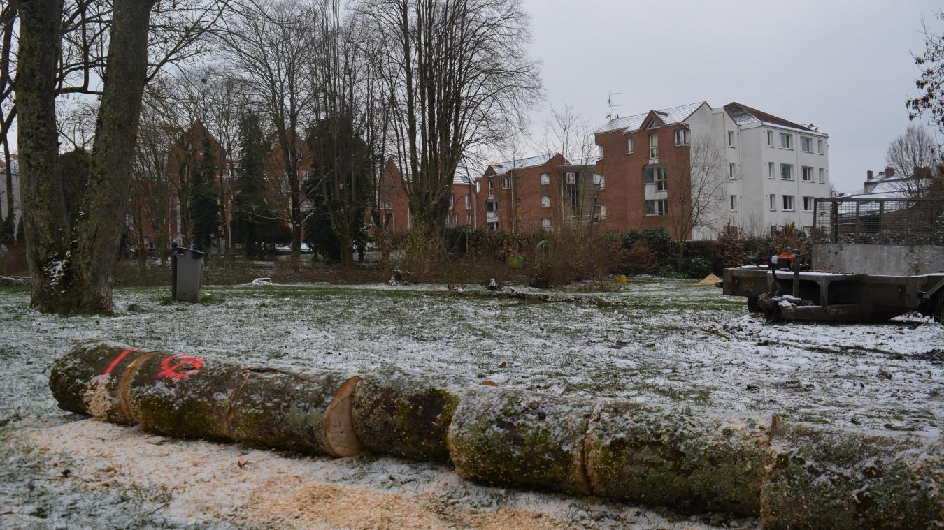 Les travaux d'aménagement dans le parc de 4150m² commencent par une coupe d'arbres ou un élagage.