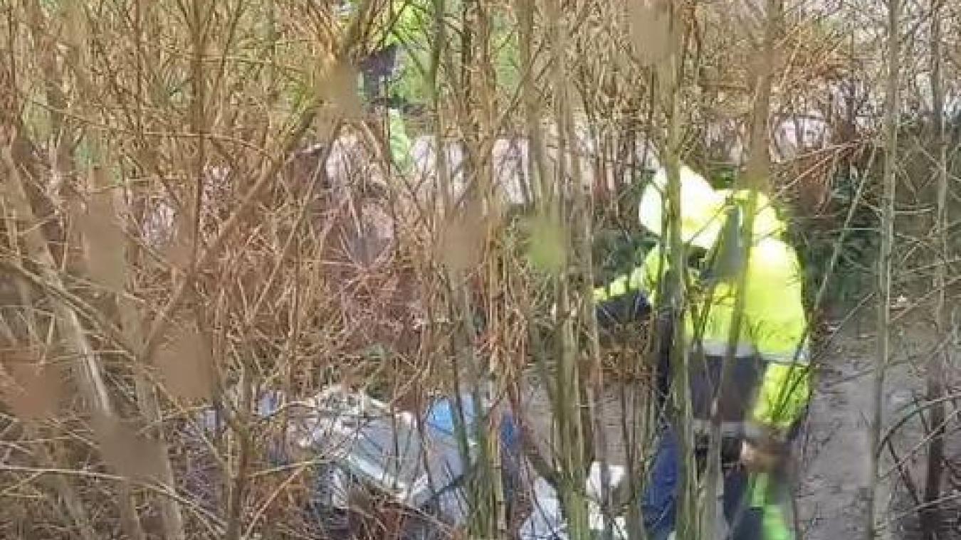 Des agents de la Ville sont intervenus un vendredi pour détruire les abris des chats au Jeu-de-Mail. Ce qui a créé pas mal de remue-ménage !