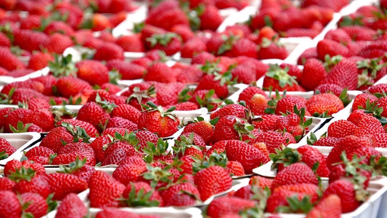 Stéphane Pozzobon espérait signer 50 CDI annualisés pour ramasser les fraises de ses nouvelles serres.
