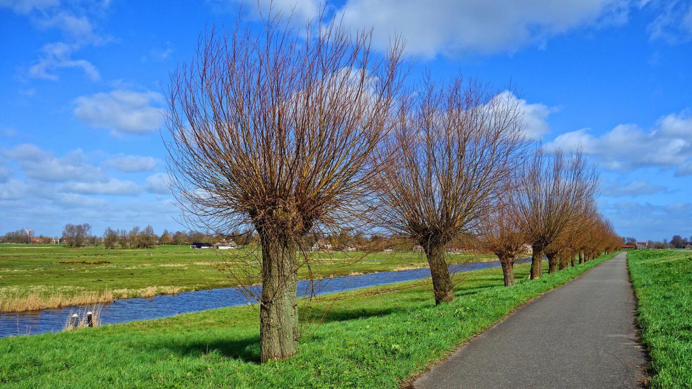 Une démonstration d'élagage des arbres têtards est prévue à Noordpeene le 6 mars.
