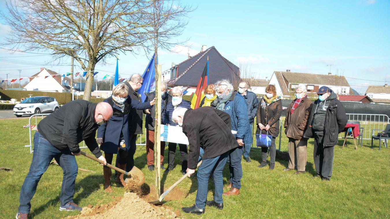 Un poirier d'ornement a été planté dans le parc de la rue Niedermarsberg.