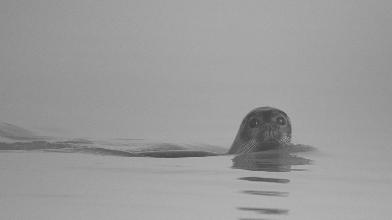 Il était un phoque touquettois qui aimait les photos.