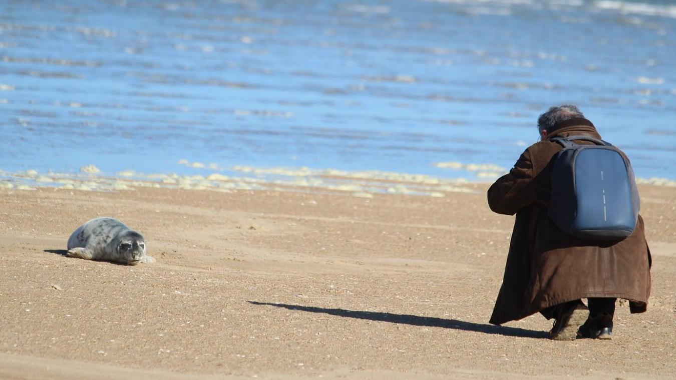Daphnée Diomande a photographié certains badauds en train de perturber le repos des jeunes phoques, ce qui peut conduire à leur abandon.