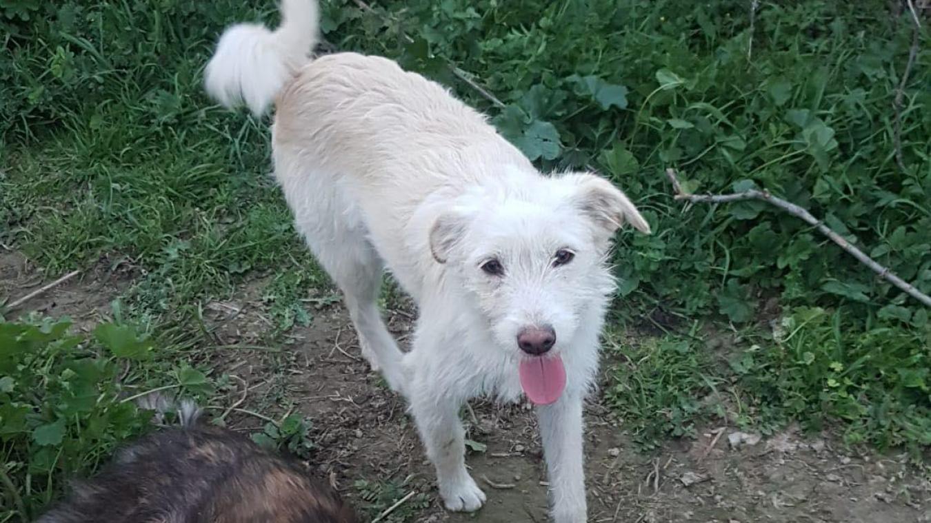 Snoopy est âgé d'un peu moins d'un an, et il a le poil blanc et beige.