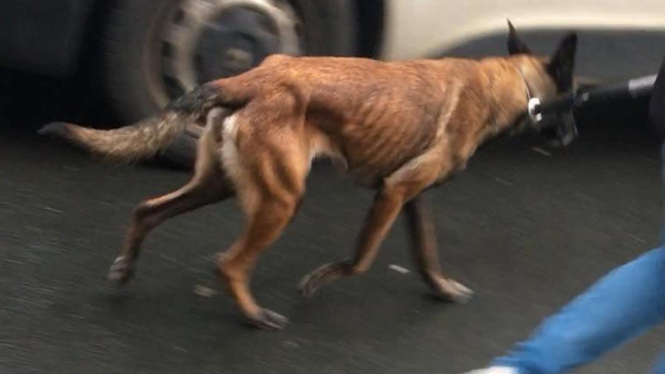 Les deux chiens sont visiblement en sous-nutrition.