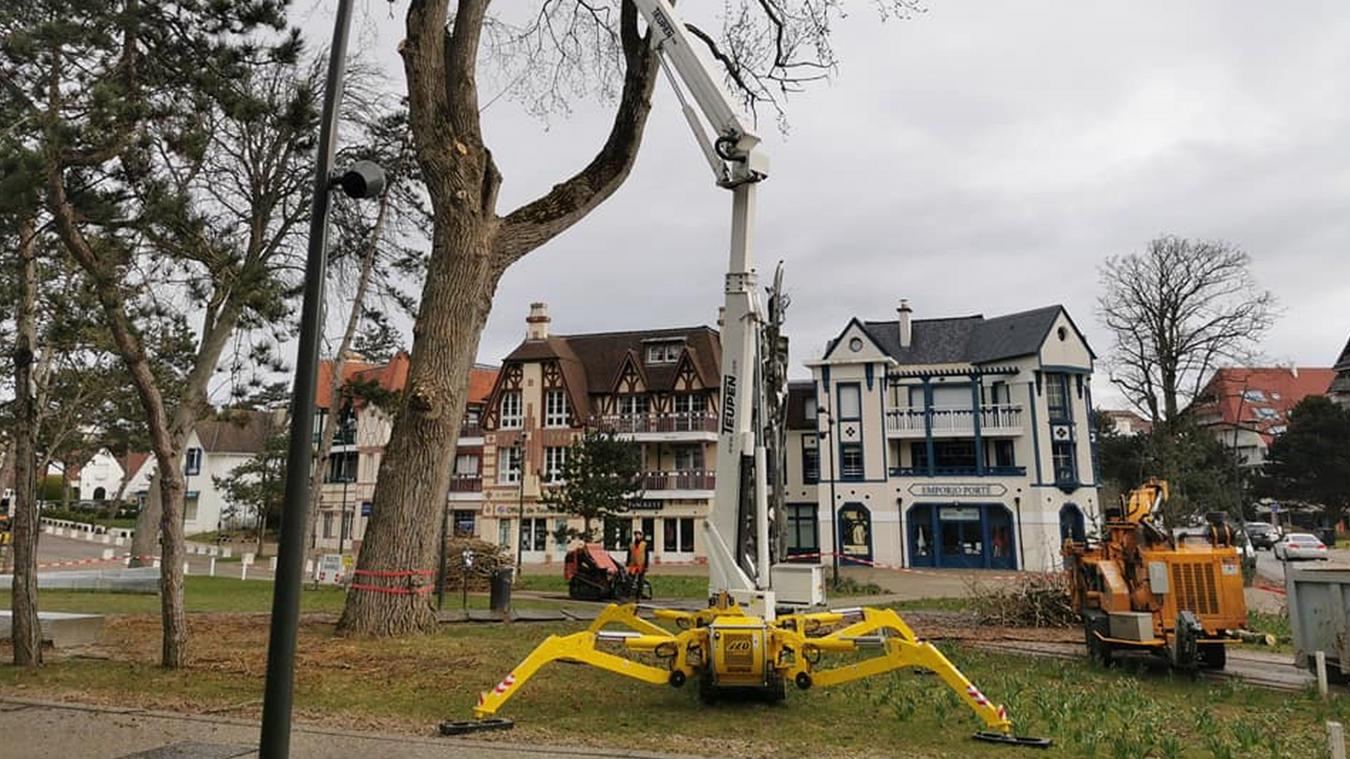 La coupe du peuplier a été effectuée par la société d'élagage Arboritek, installée à Cucq.