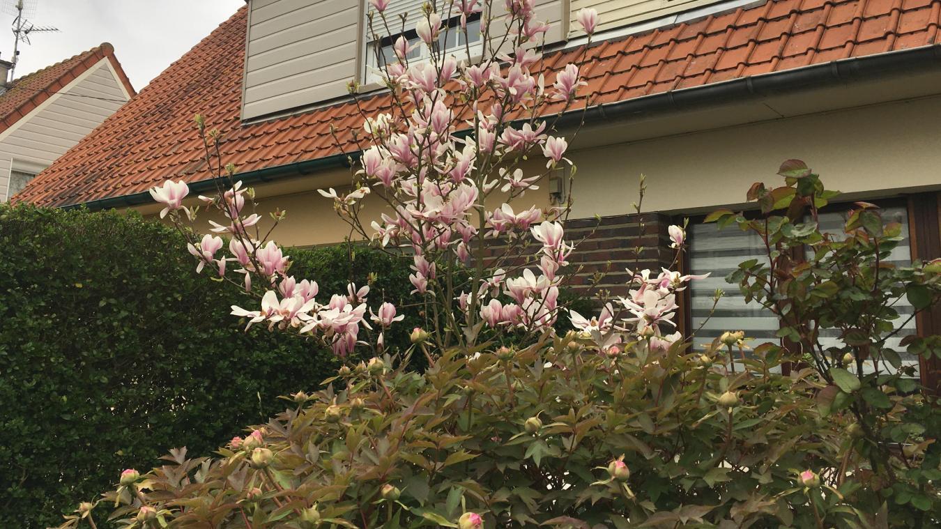 Vert comme le printemps, rose comme les magnolias en fleurs dans Aire-sur-la-Lys.