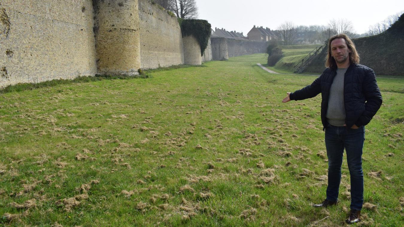 C'est ici, sur un espace vert au pied des remparts, près du collège Saint-Winoc, que les premiers moutons s'installeront, vendredi 9 avril, pour « tâter le terrain ».